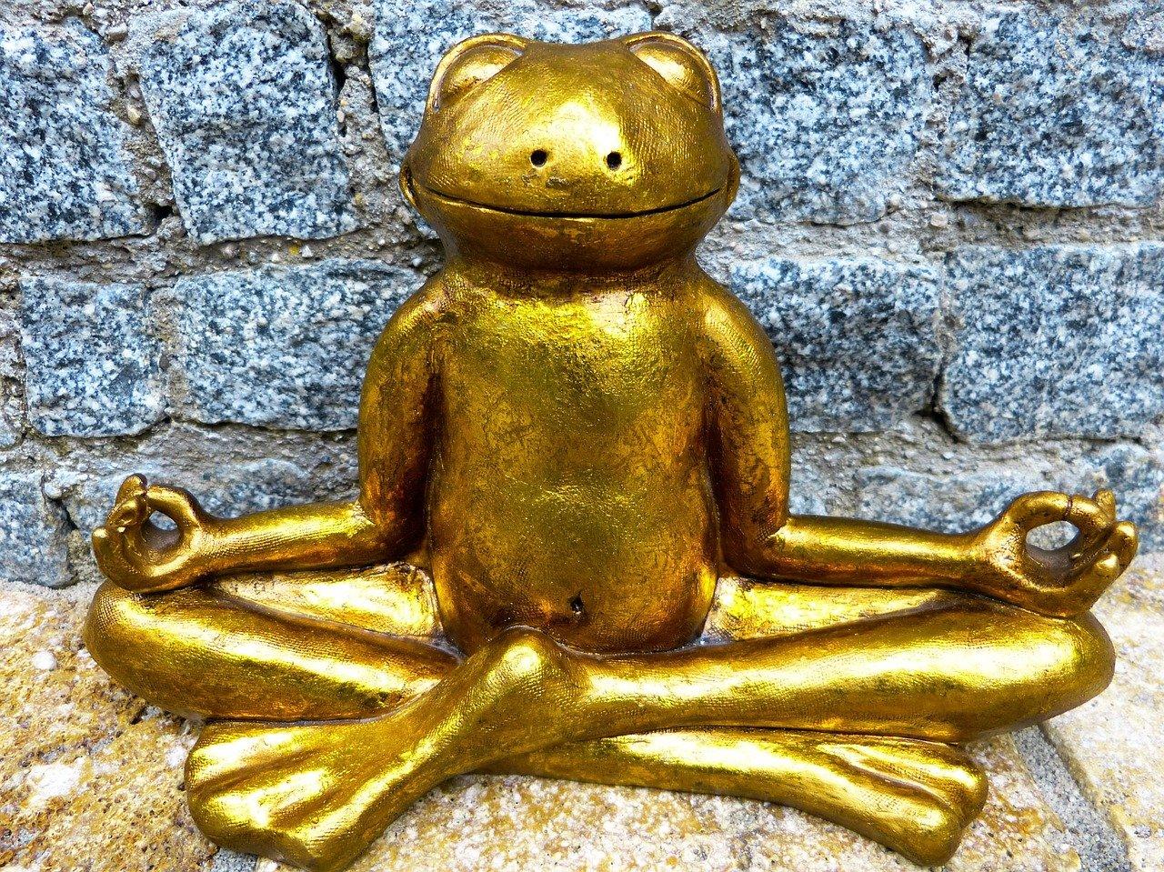 relaxation, meditation, frog